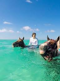 Take A Swimming Horse Tour On Your Next Cayman Islands Vacation.