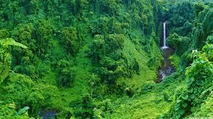 4k Tapete Dschungel - Amazon Wallpaper ...