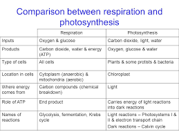 similarities between photosynthesis and cellular respiration concept similarities between photosynthesis and cellular respiration slide 27 pics