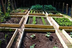 why you should have raised veggie beds