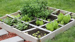 Ways To Grow Vegetables In Eco-friendly Backyard Gardens