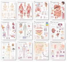 Human Body Systems Chart Body System Wall Chart Set