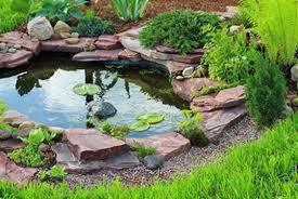 garden pond supplies. Pond Supplies \u2014 Tropical Plants And Fish Garden A