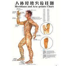 Acupuncture Chart Poster Details About 7pcs English Acupuncture Meridian Acupressure Points Posters Chart Wall Map E3