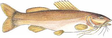 Resultado de imagem para imagens de receitas de peixes PIRAIBA