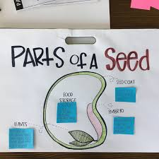 Parts Of A Seed Classroom Activities Priceless Ponderings