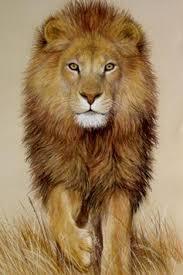 lion wallpaper تصوير الشاشة 15