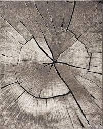 natco home rainier oak tree multi black area rug 7 10 x