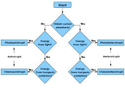 71 Perspicuous Light Dependent Reactions Flow Chart