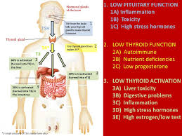 Thyroid Hormone Flow Chart Thyroid Imbalances And What You Need To Do About It Just