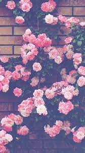 Aesthetic Rose Wallpapers - Top Free ...