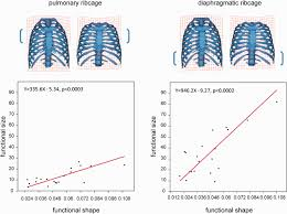 The rib cage is formed by the sternum, costal cartilage, ribs, and the bodies of the thoracic vertebrae. In Vivo 3d Analysis Of Thoracic Kinematics Changes In Size And Shape During Breathing And Their Implications For Respiratory Function In Recent Humans And Fossil Hominins Bastir 2017 The