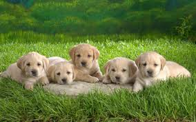 Puppy Backgrounds For Computer ...