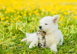 kittens and puppies hugging.  And Cute Puppy Hugging A Kitten On Dandelion Field And Kittens Puppies Hugging I