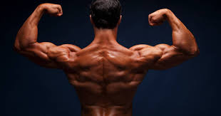 How To Build Muscle Mass On A Plant Based Diet Breaking Muscle