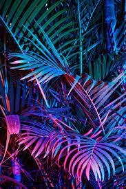 Neon jungle, Neon aesthetic