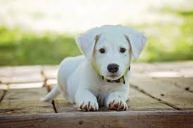 Home remedies for dog's itchy skin | Pet Recovery Collars™