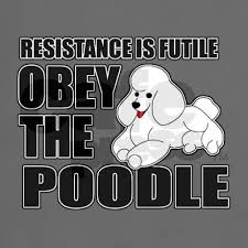 Image result for resistance is futile obey the poodle