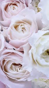 Pale Pink and White Roses Wallpaper ...