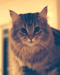 Cat Coat Rack Misu perched atop coat rack in living room 41