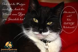 Lustige Katzenbilder Mit Sprüchen Du Kannst Schne Mbel Haben Oder