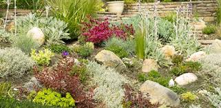 Small Picture Landscaping with Drought Tolerant Plants Todays Homeowner