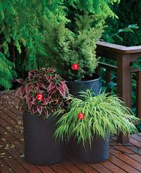 Small Picture Stylish Shady Containers Fine Gardening