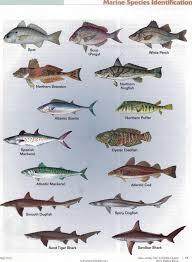 New Jersey Fish Identification Chart 2