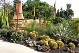 Small Picture The Best Types of Cactus to Grow in Your Garden