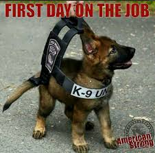 first day on the job k9 unit animal love i first day on the job k9 unit