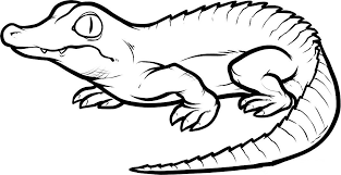 Small Picture Crocodile Coloring Pages Free Archives Printable Coloring page