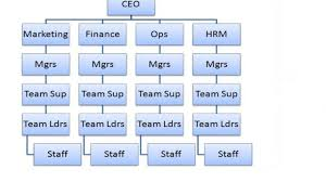 Loreal Organization Chart What Is A Tall Hierarchical Structure