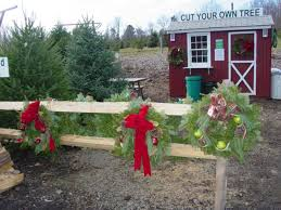15 Places To Cut Your Own Christmas Tree In MinnesotaChristmas Tree Cutting Nj