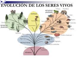 Biodiversidad Formas de vida. Biodiversidad Es la variedad de seres vivos  que habitan en la tierra Diversidad de Especies Diversidad Genética  Diversidad. - ppt descargar