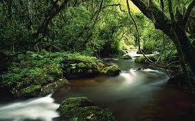 Stream in the jungle