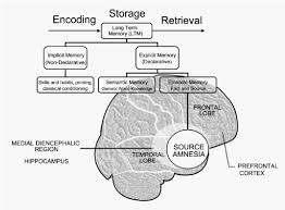 Long Term Memory Chart Source Amnesia Neuropsychological Association Diagram With