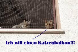 Katzennetz Nrw Die Adresse Für Ein Katzennetz Katzenbalkon Das