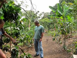 Kitchen Garden Farm Costa Rica Botany Garden And Coffee Farm Bynobleboldness