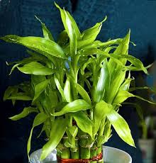 9 best feng s plants for your good