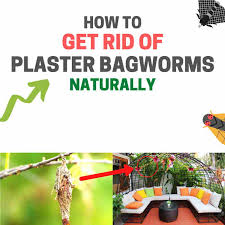 get rid of plaster bagworms naturally
