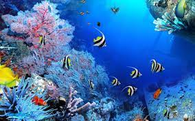 Wallpaper Ikan Laut