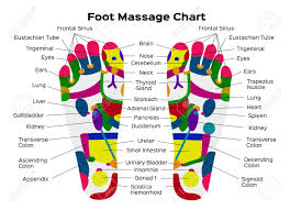 Reflexology Chart Stock Vector Illustration Foot Reflexology Chart With Accurate