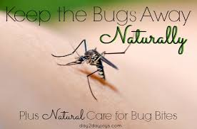 Keep the Bugs Away