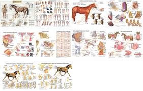 Equine Laminated Chart Bundle Set Of 10 Posters
