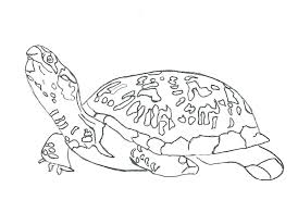 Tremendous Turtle Coloring Pages Puppet Honu Sea Free Sheet With