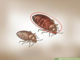 image led recognize bed bugs step 1