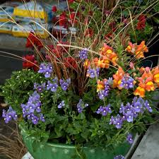 Container Gardening  Southern LivingContainer Garden Ideas For Fall