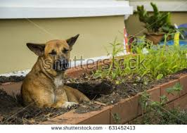 Small Picture Mongrel Stock Images Royalty Free Images Vectors Shutterstock