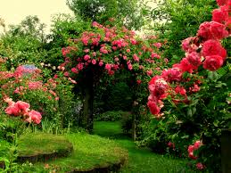 Small Picture pink rose garden top hd wide wallpapers free for desktop