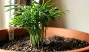 low light indoor plants safe for cats best house plants house plants low light cat safe